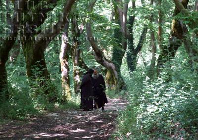 popovi u šumi platana